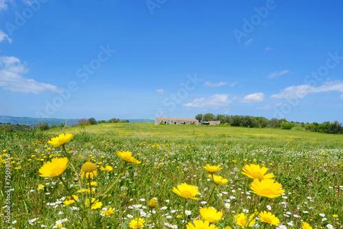 Aluminium Heuvel Panorama con prato fiorito