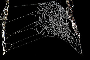 trap, snare, hook, pitfall, catch, cobweb. woven web of the spid