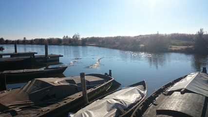 Cormoranes volando sobre canal