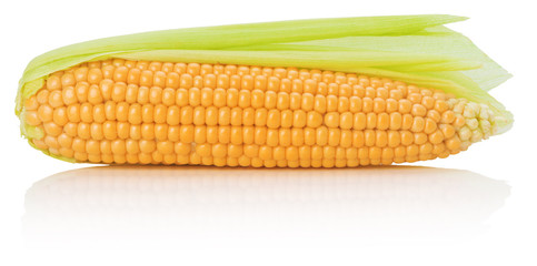 fresh corn isolated on the white background