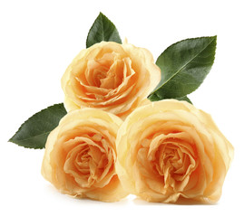 Bouquet of beautiful yellow roses isolated on white