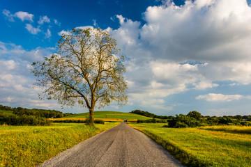 Tree along a country road near Spring Grove, Pennsylvania.