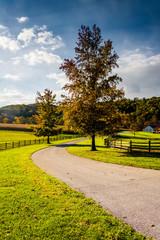 Tree and farm fields along a farm road in rural York County, Pen