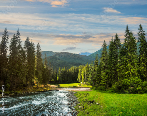 Mountain river in pine forest at sunrise © Pellinni