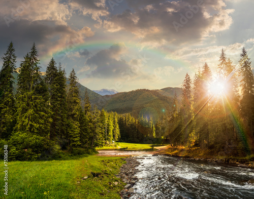 Mountain river in pine forest at sunset © Pellinni