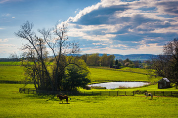 View of a pond on a farm in rural York County, Pennsylvania.