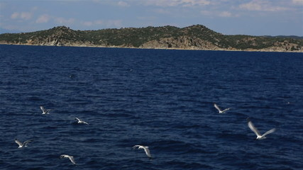 Seagulls flying over the sea.