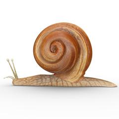 Helix (gastropod)