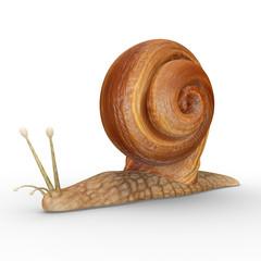 Helix (Snail)