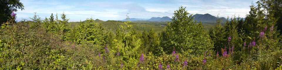 Canadian forest panoramic view. Vancouver. British Columbia