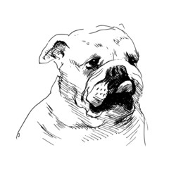 Hand drawing a dog's head