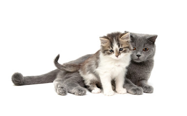 kitten and cat isolated on a white background