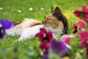 Three-colored cat on the grass with flowers