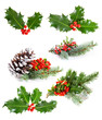 Set of   Holly leaves and berries with a pine branch on a white - 75125718