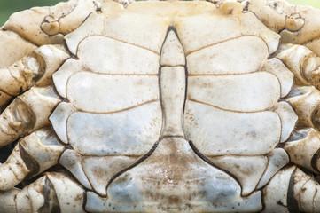 Crab shell pattern