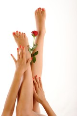 Beautiful girl legs with red rose