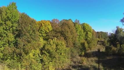 Flight over  autumn wood in   autumn day. Aerial  shot