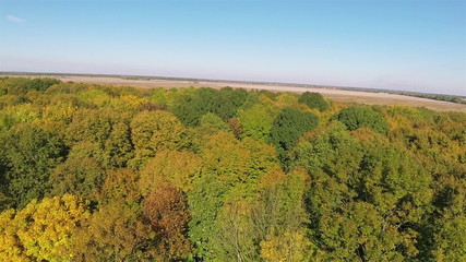 Yellow and green trees in wood. Aerial  with drone shadow