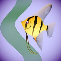 llustration of fish