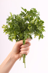 Bunch of parsley in hand