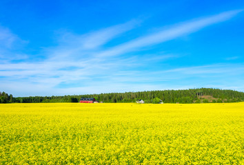 Лес на фоне синего неба и желтого цветочного луга