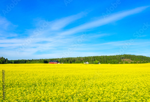 Leinwandbild Motiv Лес на фоне синего неба и желтого цветочного луга