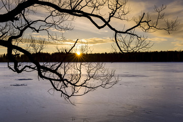 Silhouette of tree over frozen lake at sunset