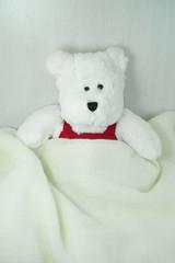 Bear under blanket