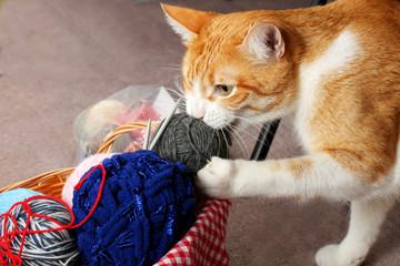 Katzenbaby spielt mit Wolle in Korb