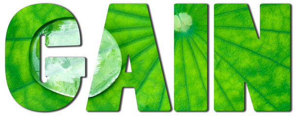 Text filled with an image of green lotus leaf