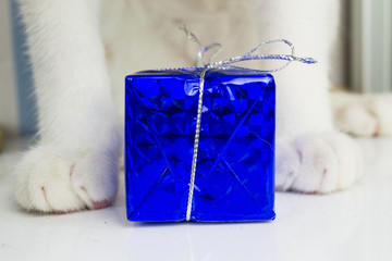 Cat and a gift