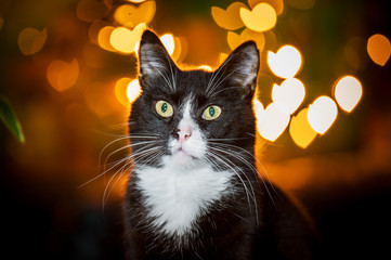 Portrait of a cat with lights on a background