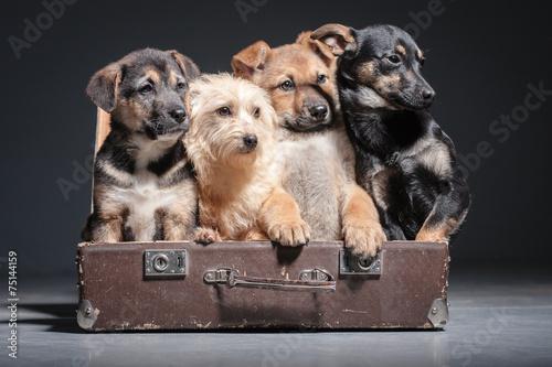 Fotobehang Hond dog