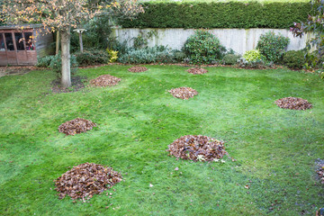 utumn or winter leaves swept into big piles on grass