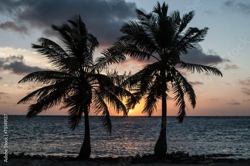 Foto op Plexiglas Palm boom Two Coconut Palms