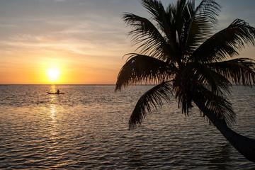 Kayaker at Sunrise and Palm Tree