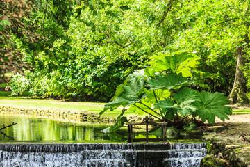Nature. Beautiful waterfall in green park