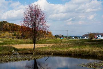 池の畔のナナカマド