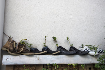Plants inside of the shoes.
