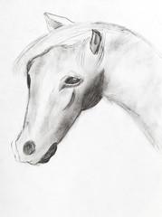 horse head by black pencil