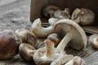 Shitake Mushroom in Cardboard Packaging on Wood Background