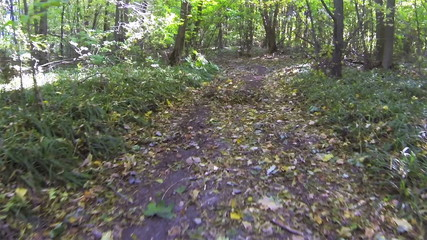 We run on  forest autumn road. POV stabilized  clip