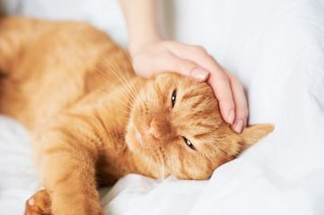 female hand caress cat