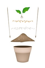 Terracotta Flower Pots with Soil and Young Plant