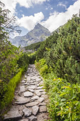 Road towards the summit (Koscielec)