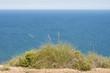 Alpha grass, Stipa tenacissima, growing by the Mediterranean Sea