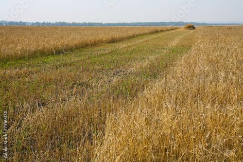 Leinwandbild Motiv mown wheat field and stack