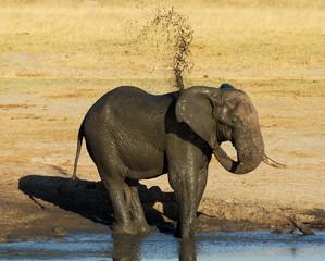 Eléphant prenant un bain de boue
