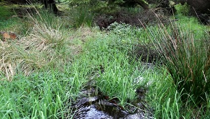 Water flowing through grass.