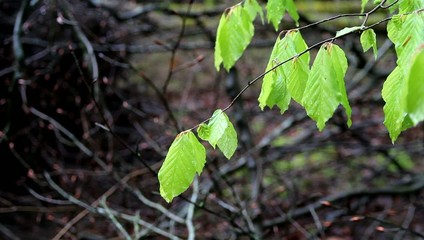 Bright green leaves moving in the breeze